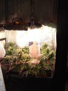 Χρησιμοποιόντας LED μπορούμε να έχουμε το φως κοντά στο φυτό μας χωρίς προβλήματα