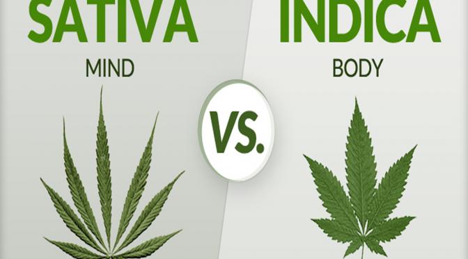 Οι διαφορές ανάμεσα στις Indica και στις Sativa
