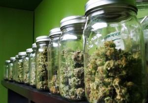 curing_cannabis_jars