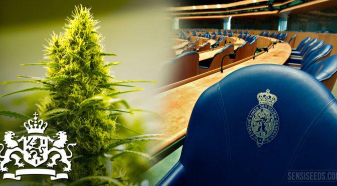 Νομοσχέδιο στην Ολλανδική Βουλή με στόχο την ρύθμιση της καλλιέργειας της κάνναβης.